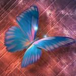 2007-papillons