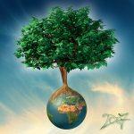 2007-terre-arbre